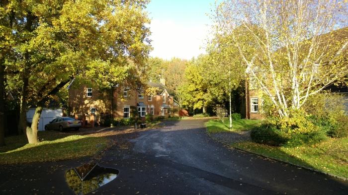 Sunny suburbia