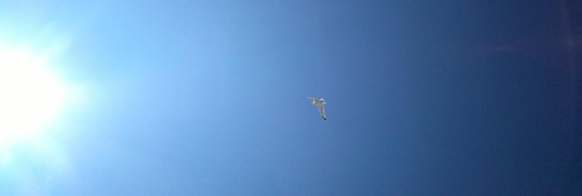 Arty gull sky shot
