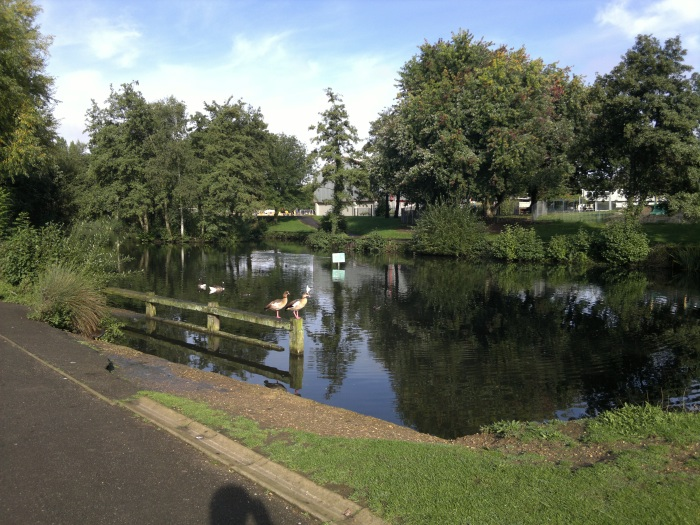 Pond image, click to enlarge or download 12mp original