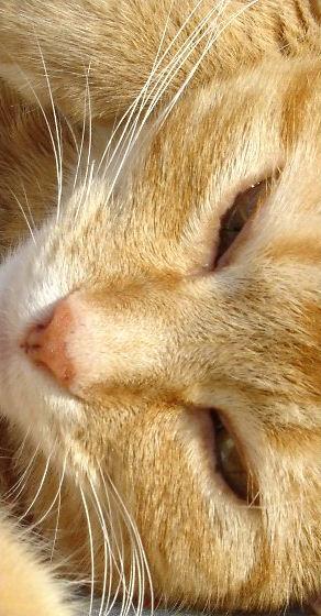 cat comparison