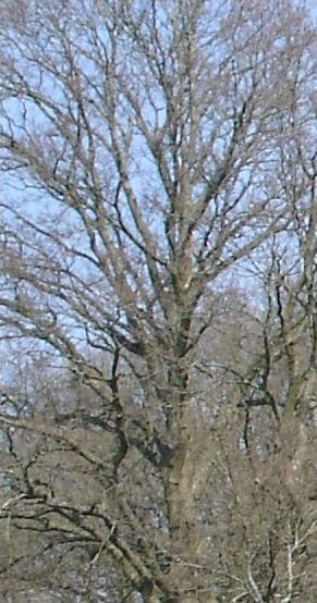 Tree comp