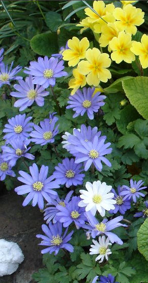 Flowers Comp